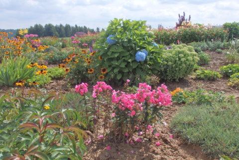 Zdjęcia z galerii Najpiękniejszy... Ogród jak u naszej Babci